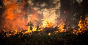 Пожароопасный сезон в лесу