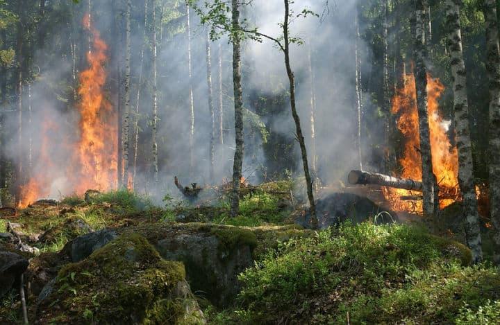 Лесные пожары в Московской области