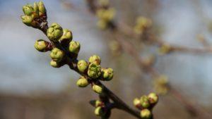 Подкормка растений весной