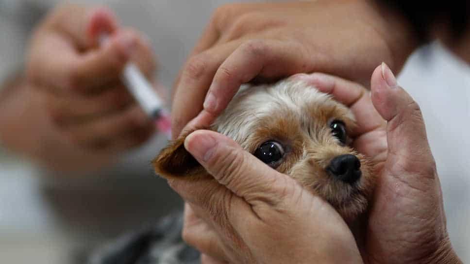 Вакцинация бесплатно для животных